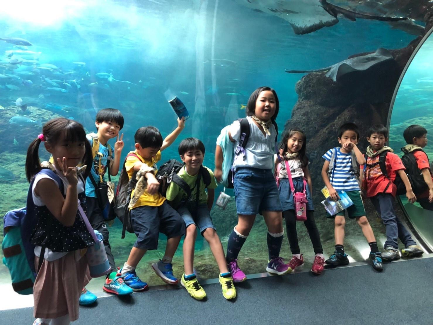 新江ノ島水族館・ドッチボール大会_e0131910_09524065.jpg