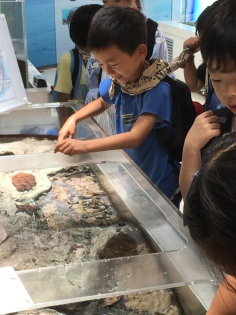 新江ノ島水族館・ドッチボール大会_e0131910_09530525.jpg