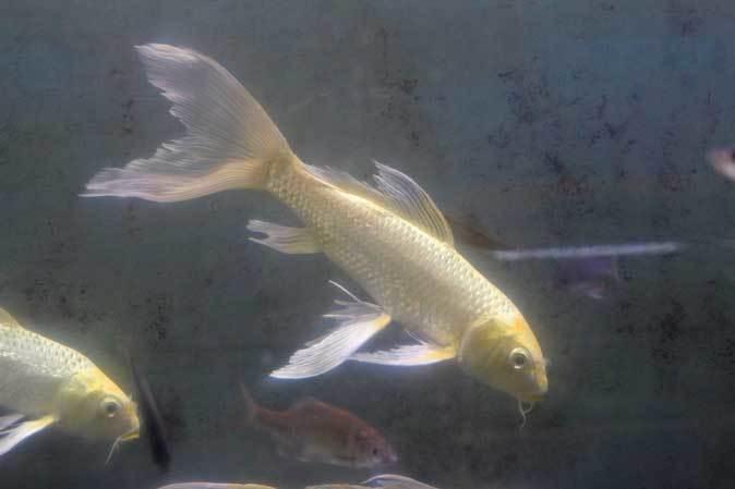 智光山公園こども動物園「ミニ水族館」(後編)_b0355317_21480411.jpg