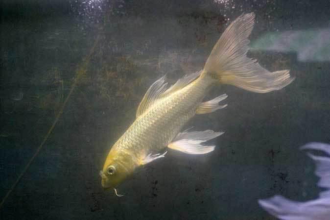 智光山公園こども動物園「ミニ水族館」(後編)_b0355317_21592914.jpg