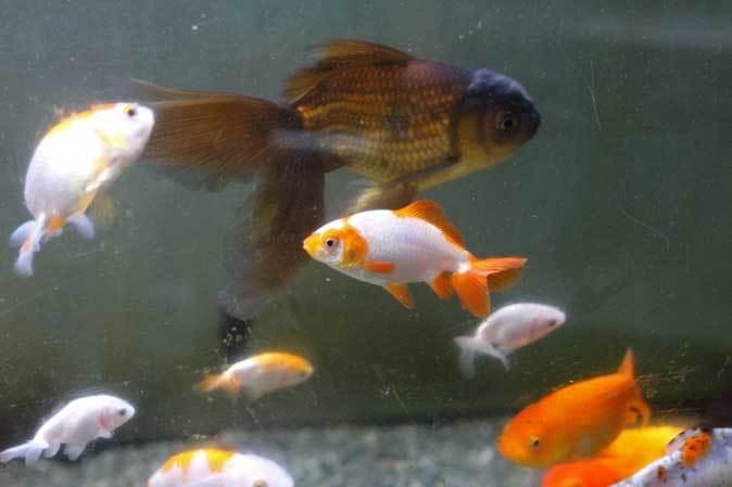 智光山公園こども動物園「ミニ水族館」(後編)_b0355317_22011744.jpg