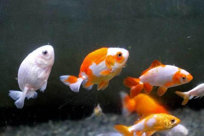 智光山公園こども動物園「ミニ水族館」(後編)_b0355317_22040736.jpg
