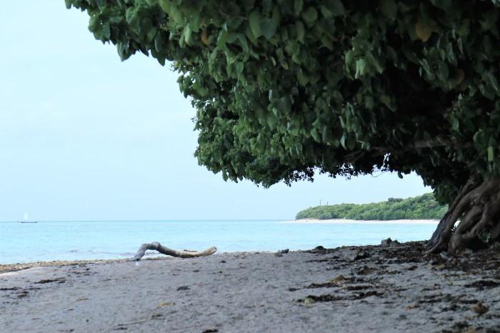 一夜しか咲かない「サガリバナ」を見に沖縄観光へ  _d0150720_17120754.jpg