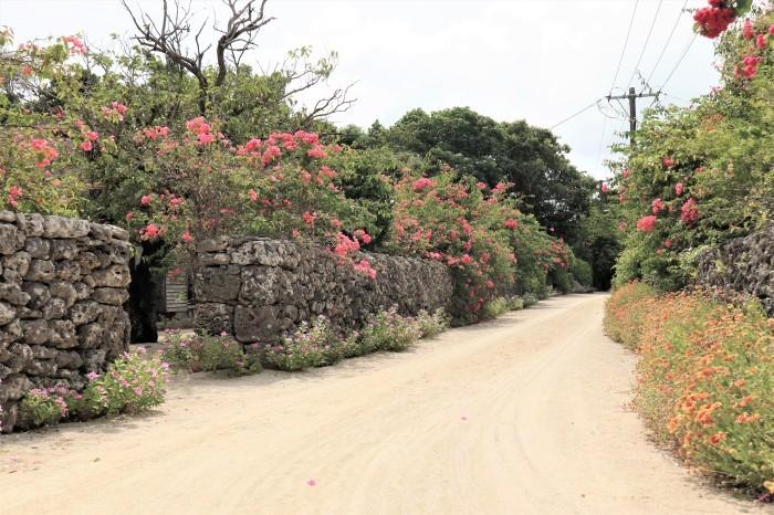 一夜しか咲かない「サガリバナ」を見に沖縄観光へ  _d0150720_17133421.jpg