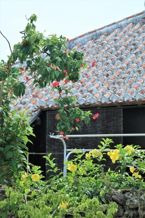 一夜しか咲かない「サガリバナ」を見に沖縄観光へ  _d0150720_17134862.jpg