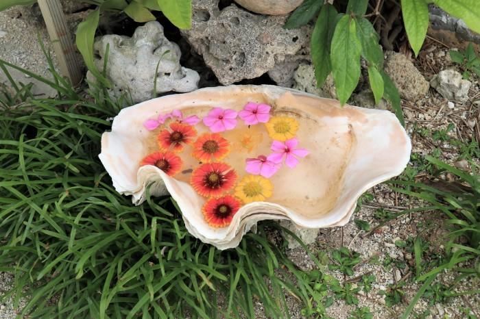 一夜しか咲かない「サガリバナ」を見に沖縄観光へ  _d0150720_17150618.jpg