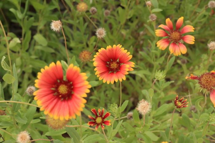 一夜しか咲かない「サガリバナ」を見に沖縄観光へ  _d0150720_17155166.jpg