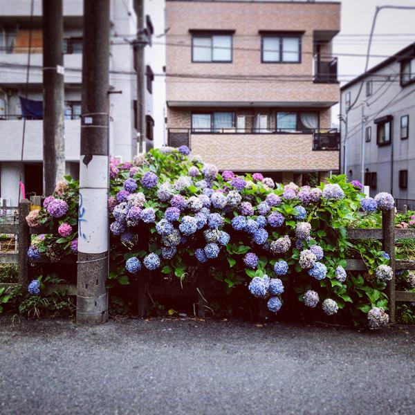 世田谷区豪徳寺 / iPhone 8_c0334533_14463726.jpg