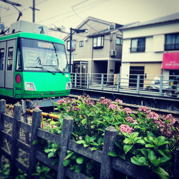 世田谷区豪徳寺 / iPhone 8_c0334533_14470881.jpg