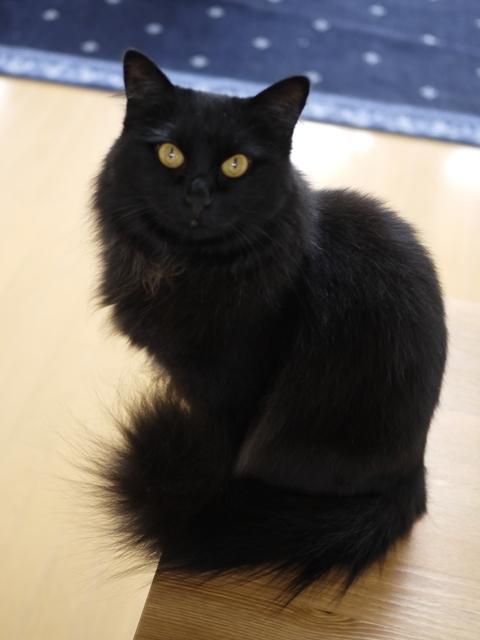猫のお留守番 マリンちゃん編。_a0143140_19580833.jpg