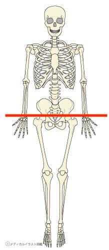 手首が辛い方、骨盤を整えてみませんか? 〜ある日の施術より〜_e0073240_08075849.jpg
