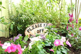花壇の新入り_a0184348_16442566.jpg