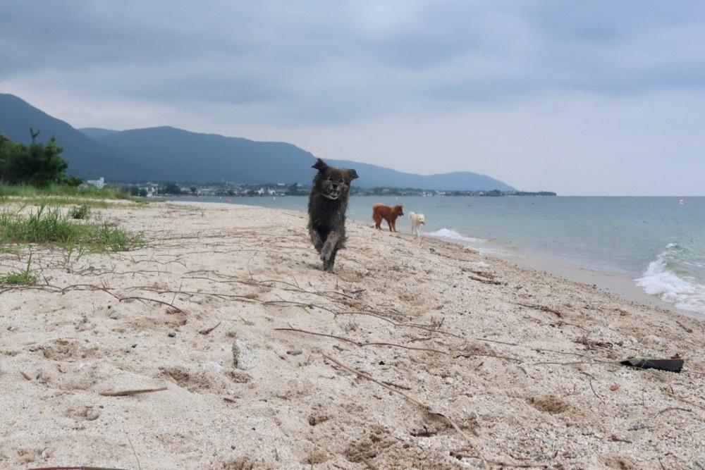 2019琵琶湖 vol.4_a0119263_18003832.jpg