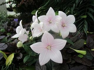 板野生活 ~夏の花~_c0218368_10561588.jpg