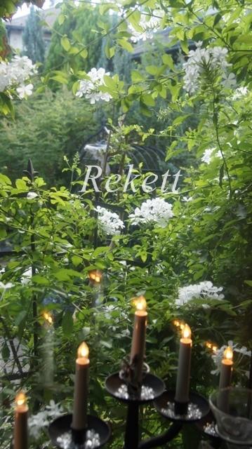 ホワイトカラーのプルンバ―ゴ ルリマツリ~❤_f0029571_23435497.jpg