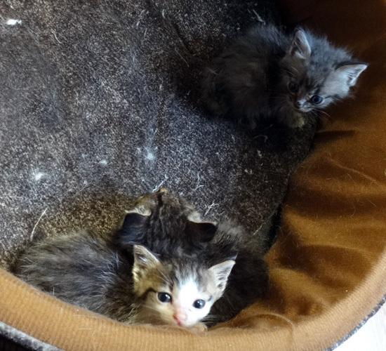 庭のお客様はキアゲハと・・・キジバトの営巣・子猫の保護など_a0136293_16505448.jpg