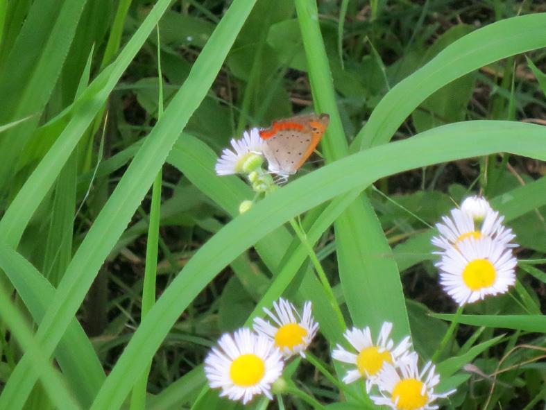■今は盛りの赤とんぼに蟬にコオロギそして藪蚊――週替わりの夕暮れ[7/10-14]_d0190217_22411340.jpg