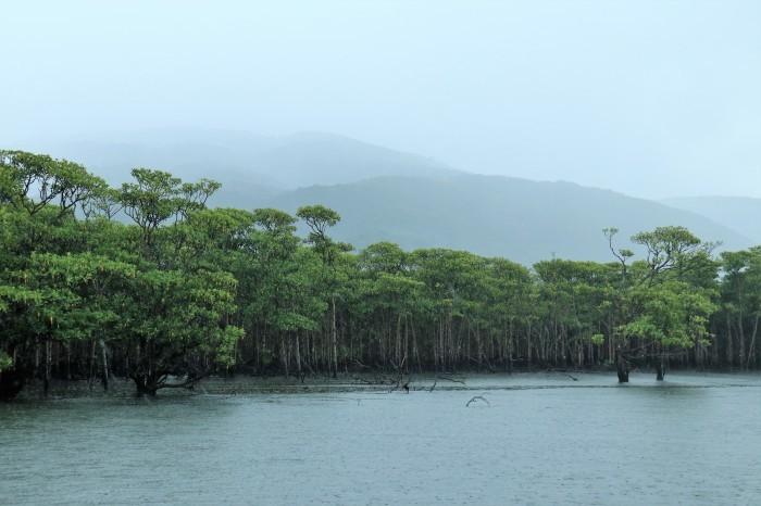 一夜しか咲かない「サガリバナ」を見に沖縄観光へ  _d0150720_13350672.jpg
