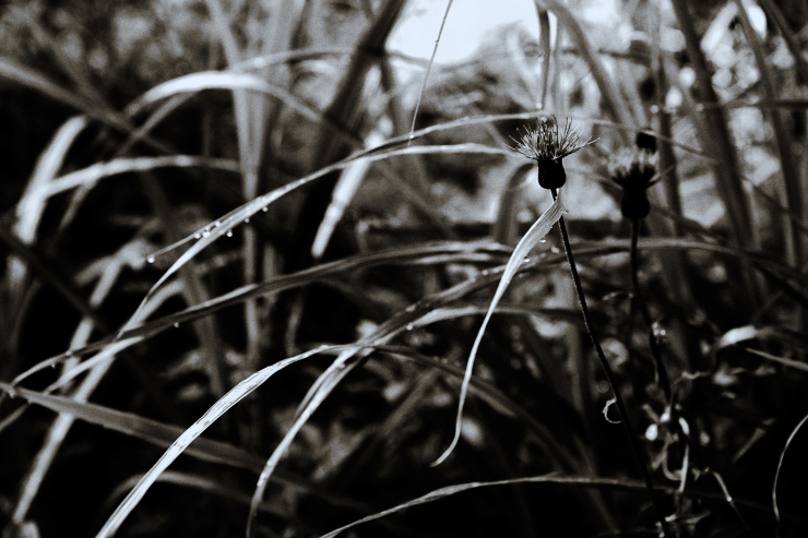 plant _e0342136_19040797.jpg
