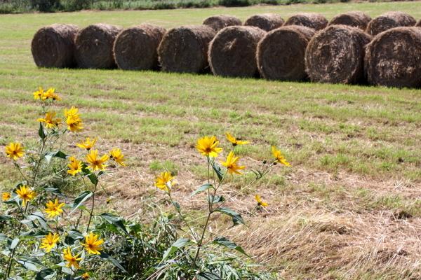 牧草ロールのある風景 7月14日_f0113639_16144868.jpg