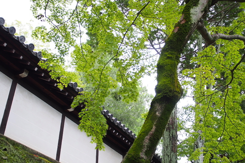 【梅雨空とあじさい】 京都 東福寺「洗玉澗」_b0008655_13563566.jpg