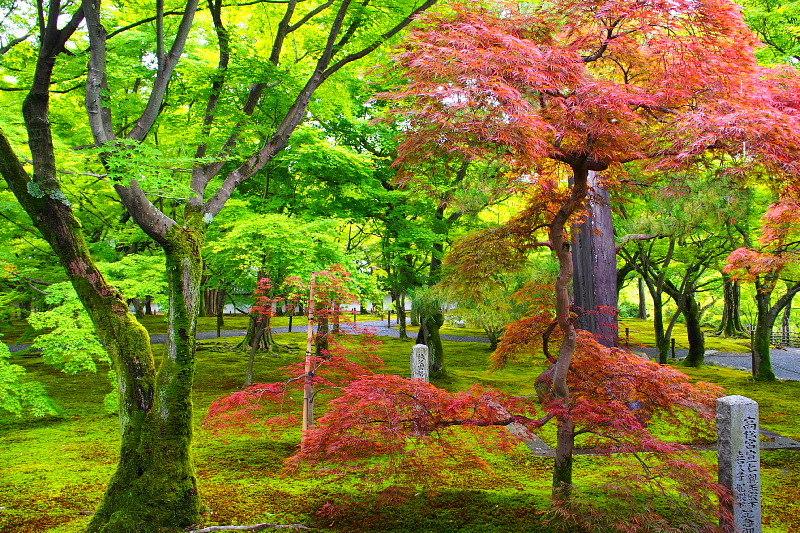 【梅雨空とあじさい】 京都 東福寺「洗玉澗」_b0008655_14011799.jpg