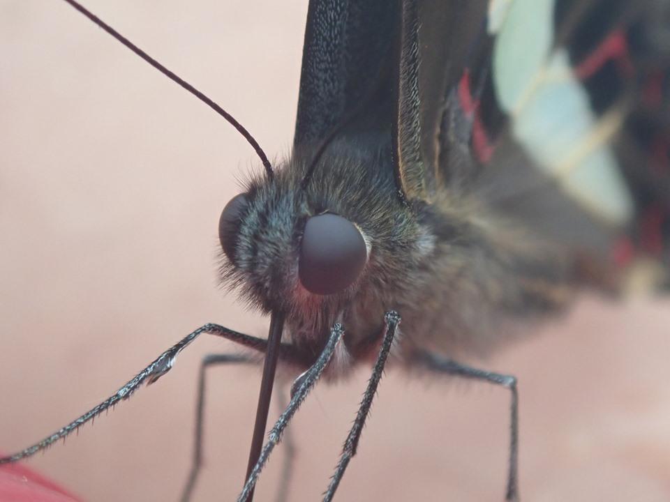 美しい蝶々。_b0160957_10010261.jpg