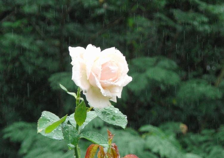 雨の日は傘をさして_c0065260_17014441.jpg