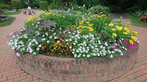 夏の花壇_f0228967_22305215.jpg