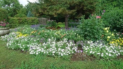 夏の花壇_f0228967_22311180.jpg