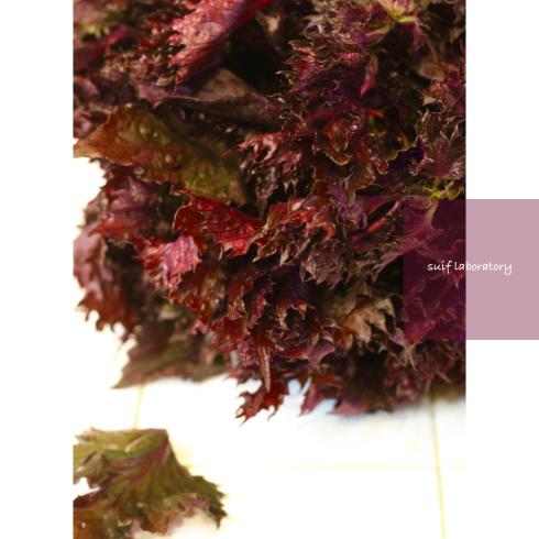 紫蘇ジュース_c0156468_19572444.jpg