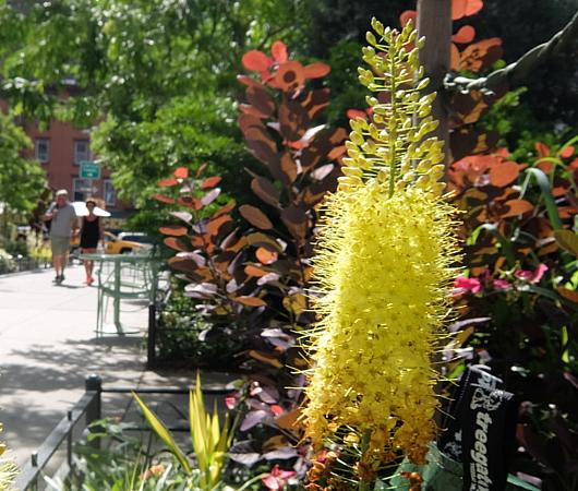 ハドソン・ヤード近くにできたミニ公園_b0007805_22100892.jpg