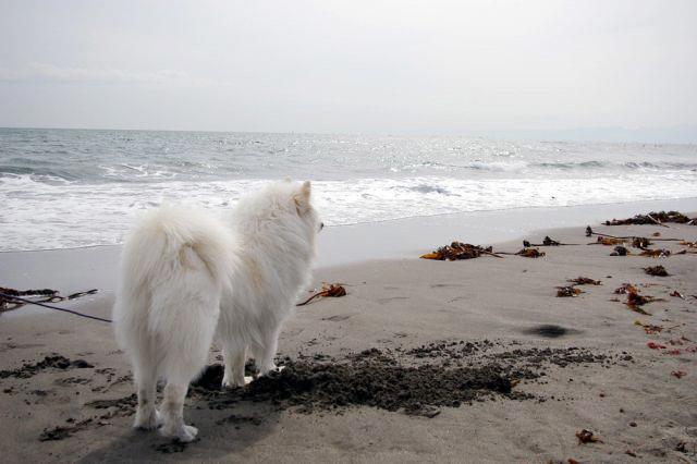 海の日_c0062832_16215508.jpg