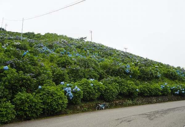 今年も行って来ました、大川原高原。あじさい見ごろ_b0149340_20184169.jpg
