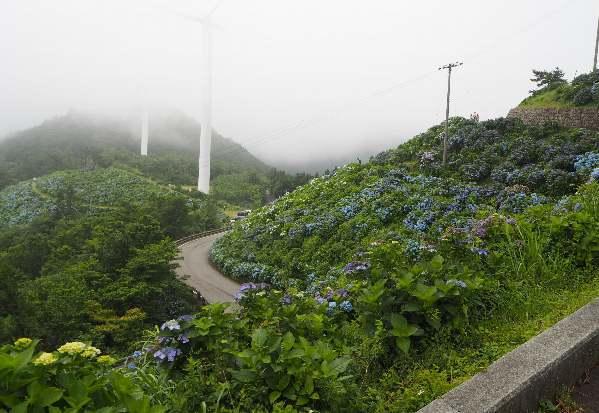 今年も行って来ました、大川原高原。あじさい見ごろ_b0149340_20245996.jpg