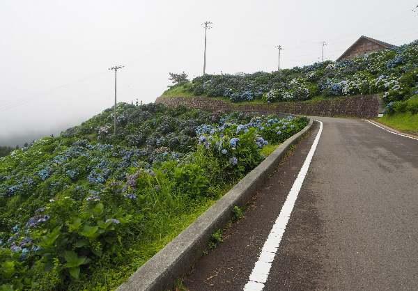 今年も行って来ました、大川原高原。あじさい見ごろ_b0149340_20250617.jpg