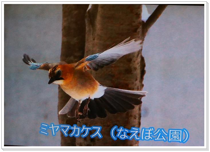c0271053_16472721.jpg