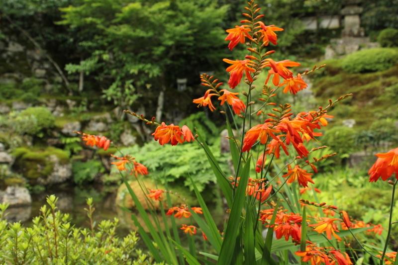 7月15日 お気に入りの琵琶湖~京都大原へのドライブ_a0023466_19083932.jpg