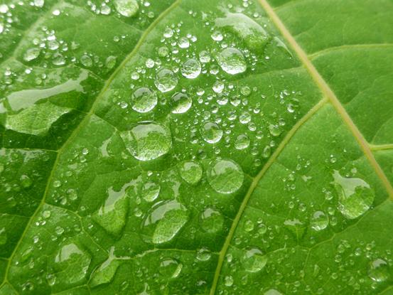 梅雨と霧と山_d0366590_14204051.jpg