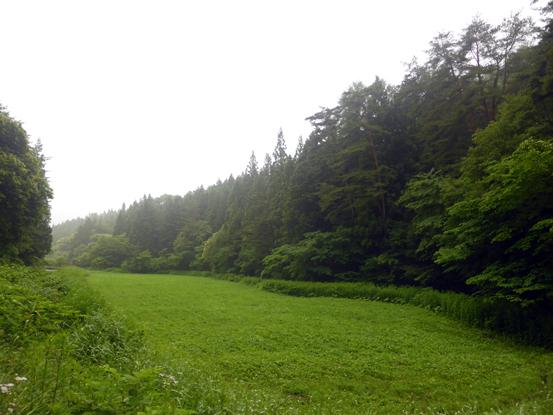 梅雨と霧と山_d0366590_14204058.jpg