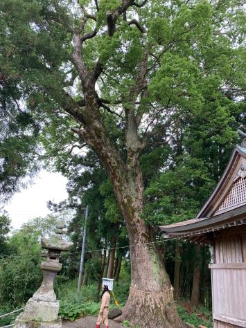 6月に大分県臼杵市を訪れました。_a0112393_12162544.jpg