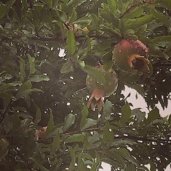 雨の日の愉しみ_f0061394_21032823.jpg