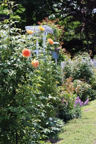 夏の花♪ヤナギランが咲く庭_e0341606_21362211.jpg
