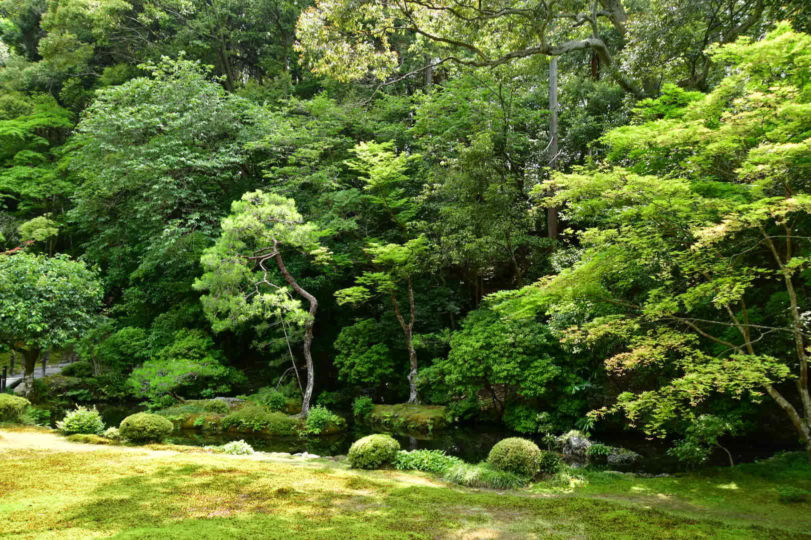 京都旅 2019 その7_b0223512_20233924.jpeg