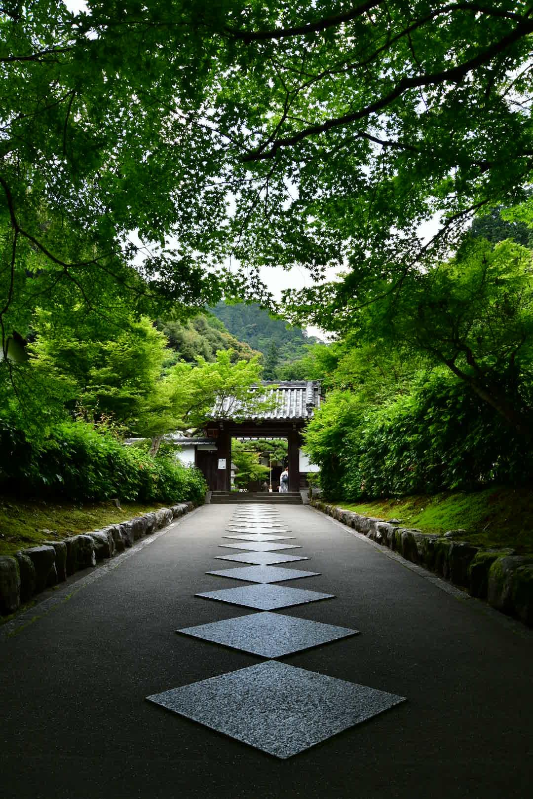 京都旅 2019 その7_b0223512_21250727.jpeg