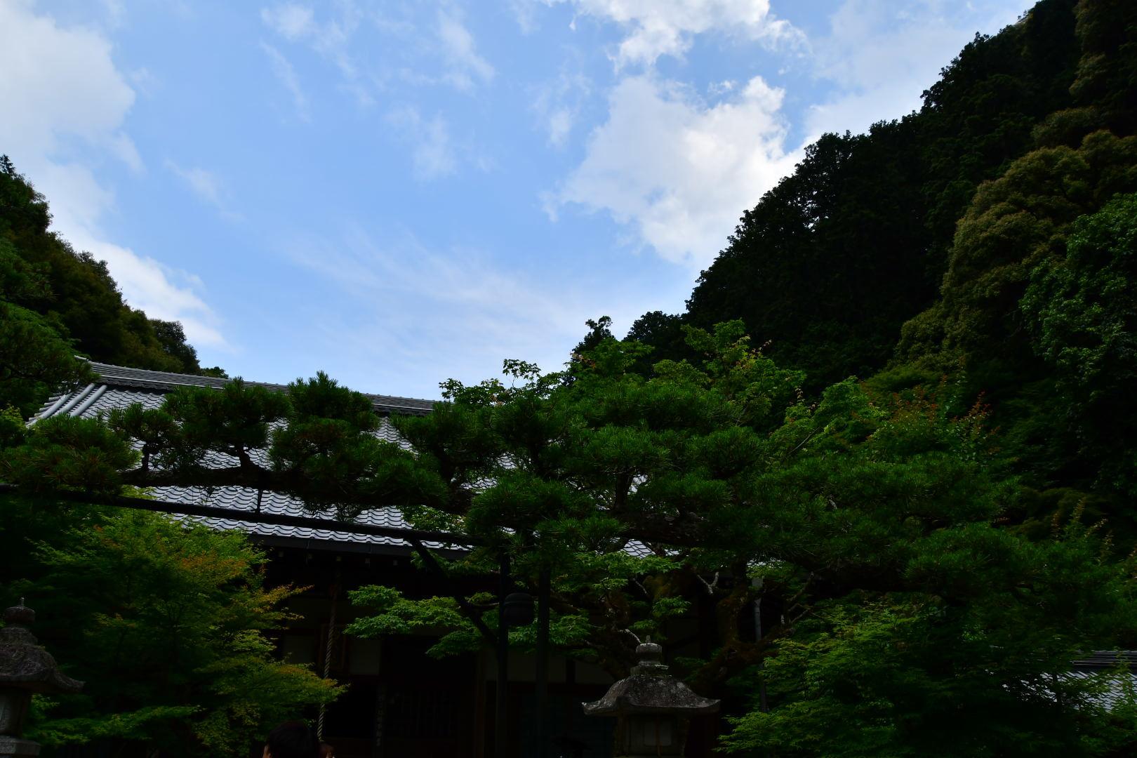 京都旅 2019 その7_b0223512_23334736.jpeg
