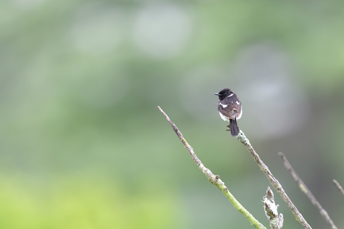 高原の野鳥①_f0288418_14501207.jpg