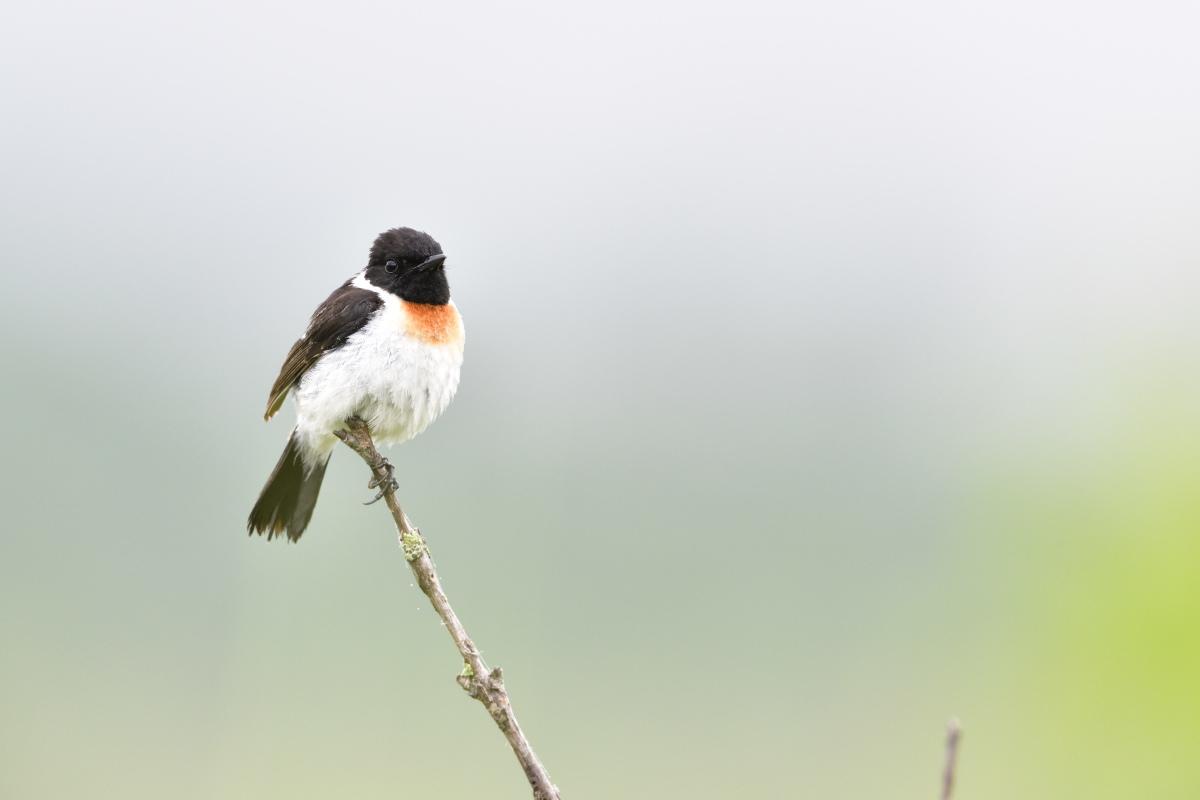 高原の野鳥①_f0288418_14501911.jpg