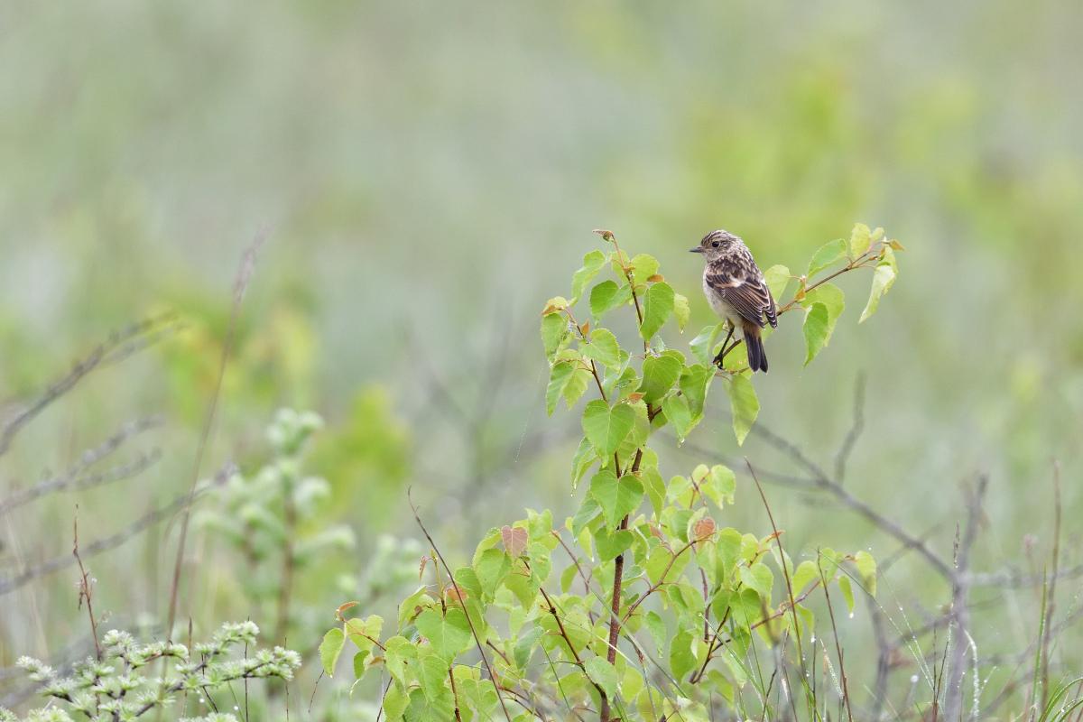 高原の野鳥①_f0288418_14503575.jpg