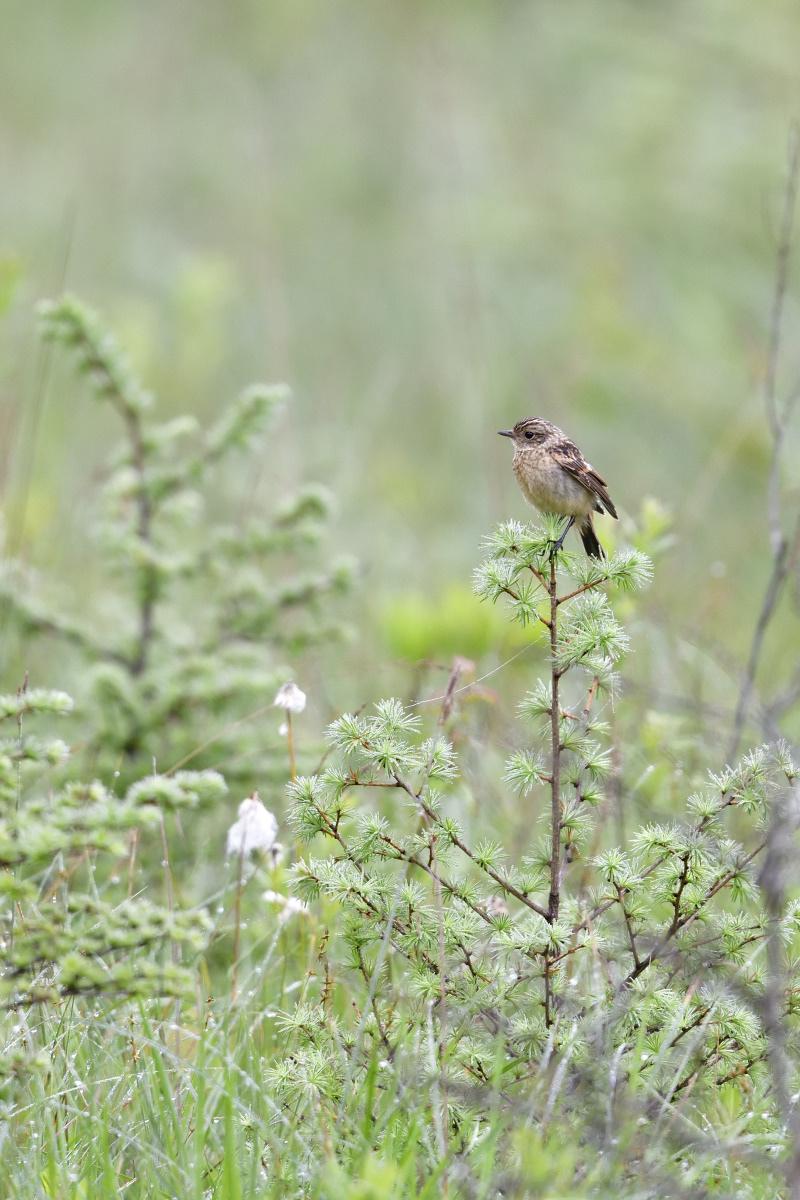 高原の野鳥①_f0288418_14504597.jpg